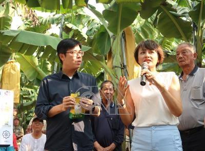 關切產銷情形 陳其邁邱議瑩走訪香蕉園